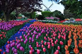 Skagit Valley Tulip Festival 2015 in Mt. Vernon Washington in April
